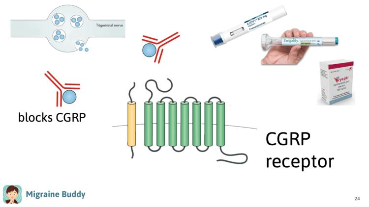Ajovy Emgality Vyepti CGRP receptor.png