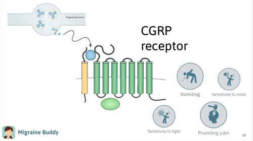 CGRP+receptor.png