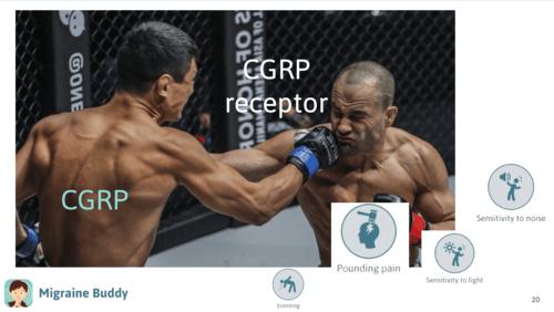 CGRP Receptor Boxing.png